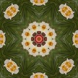 Caleidoscopio abstracto con las flores del narciso en la primavera Fotos de archivo libres de regalías