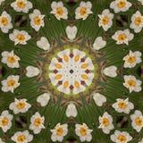 Caleidoscopio abstracto con las flores del narciso en la primavera Foto de archivo