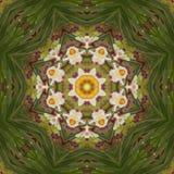 Caleidoscopio abstracto con las flores del narciso en la primavera Imagen de archivo libre de regalías