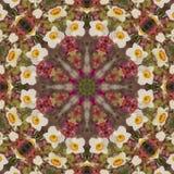 Caleidoscopio abstracto con las flores del narciso en la primavera Imagenes de archivo