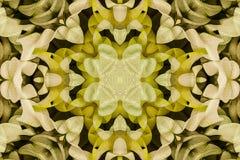 Caleidoscopio con el ornamental hermoso del color Fotografía de archivo libre de regalías