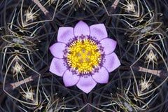 Caleidoscopio de la flor que se asemeja a una mandala Fotografía de archivo libre de regalías