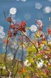 Caleidoscopio del otoño Imagenes de archivo