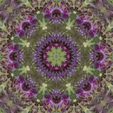 Caleidoscopio púrpura del Ironweed - gigantea de Vernonia Imágenes de archivo libres de regalías