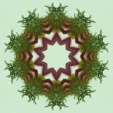 Caleidoscopio rosso e verde dell'echinacea Immagine Stock