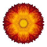 Caleidoscopische Strawflower Mandala Isolated op Wit royalty-vrije stock foto