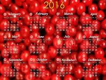 Calendário para 2016 no fundo das bagas da cereja Fotografia de Stock