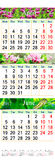 Calendar for April- June 2017 with images. Office calendar for three months April May and June 2017 with images of nature. Wall calendar for second quarter of vector illustration