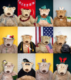 Calendar Bears Royalty Free Stock Photography