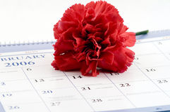 Calendar with carnation Royalty Free Stock Photos