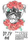 Calendar with dry brush lettering. May 2018. Dog with wreath of red flowers and green leaves. Cute pug portrait. Vector. Illustration Royalty Free Stock Photos