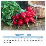 Calendar for February 2018 with still life. Bunch of round radishes with tops on the table royalty free stock image