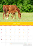 Calendar 2014. Horse. June Royalty Free Stock Image