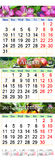 Calendar for July August September 2017 with three colored images. Calendar for three months July August and September 2017 with images of clematis apples and royalty free illustration