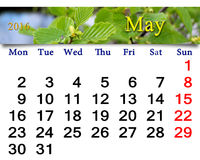 Calendar for May 2016 with alder leaves Stock Photography
