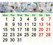 Calendar for May 2017 with blooming cherry tree Royalty Free Stock Photography