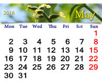 Calendar for May 2016 with image of blooming walnut Stock Images