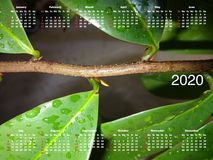Calendar for 2020. royalty free stock photography