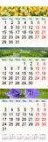 Calendar por três meses 2017 com imagens da natureza Foto de Stock