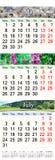 Calendar por três meses 2017 com imagens da natureza Foto de Stock Royalty Free