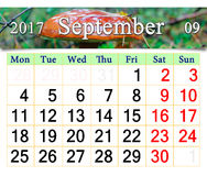 Calendar for September 2017 with mushroom Boletus badius Stock Photography