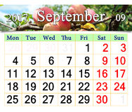 Calendar for September 2017 year with apples on the branch. Beautiful calendar for September 2017 year with ripe apples on the branch. Calendar for printing and Stock Photo