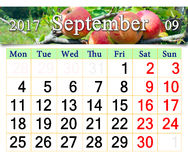 Calendar for September 2017 year with apples on the branch. Beautiful calendar for September 2017 year with ripe apples on the branch. Calendar for printing and Royalty Free Stock Photo
