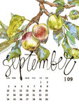 Calendar 2017. Templates with watercolor illustations. Set of 12 Months. Hand drawn watercolor flowers and berryes. Modern lettering Stock Photography