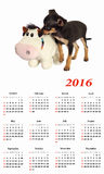 2016 Calendar.  Toy-terrier puppy with toy. Royalty Free Stock Photo