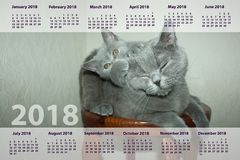 The calendar for 2018year. cat stock photography