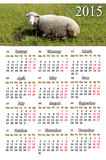 Calendar for 2015 year with sheep Stock Photo