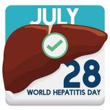 Calendario de hojas sueltas con la fecha del recordatorio del día de la hepatitis del mundo, ejemplo del vector Imagenes de archivo