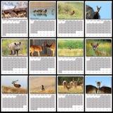 Calendario 2016 de la fauna Imagenes de archivo