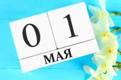 Calendario de madera blanco con el texto en ruso: 1 de mayo Flores blancas de narcisos en una tabla de madera azul Día del Trabaj Imagenes de archivo
