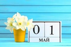 Calendario de madera blanco con el texto en ruso: 1 de mayo Flores blancas de narcisos en una tabla de madera azul Día del Trabaj Fotos de archivo libres de regalías
