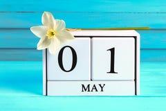 Calendario de madera blanco con el texto: 1 de mayo Flores blancas de narcisos en una tabla de madera azul Día del Trabajo y prim Imágenes de archivo libres de regalías