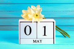 Calendario de madera blanco con el texto: 1 de mayo Flores blancas de narcisos en una tabla de madera azul Día del Trabajo y prim Fotografía de archivo