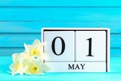 Calendario de madera blanco con el texto: 1 de mayo Flores blancas de narcisos en una tabla de madera azul Día del Trabajo y prim Imagen de archivo libre de regalías