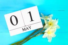 Calendario de madera blanco con el texto: 1 de mayo Flores blancas de narcisos en una tabla de madera azul Día del Trabajo y prim Fotos de archivo