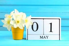 Calendario de madera blanco con el texto: 1 de mayo Flores blancas de narcisos en una tabla de madera azul Día del Trabajo y prim Imagenes de archivo