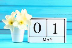 Calendario de madera blanco con el texto: 1 de mayo Flores blancas de narcisos en una tabla de madera azul Día del Trabajo y prim Fotos de archivo libres de regalías