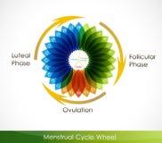Calendario del ciclo mestruale Fotografie Stock