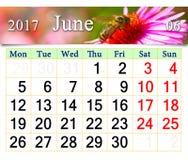 Calendario para junio de 2017 con el aster y la abeja rosados Imagen de archivo libre de regalías