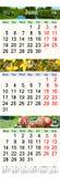 Calendario para junio julio y agosto de 2017 con las imágenes coloreadas Foto de archivo