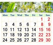 Calendario para mayo de 2017 con el cerezo floreciente Fotos de archivo