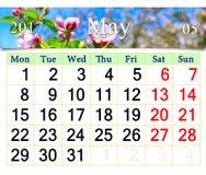 Calendario para mayo de 2017 con los brotes florecientes del manzano Imagen de archivo libre de regalías