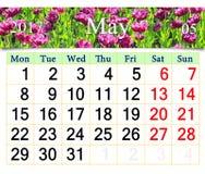 Calendario para mayo de 2017 con los tulipanes de la lila en el macizo de flores Foto de archivo libre de regalías