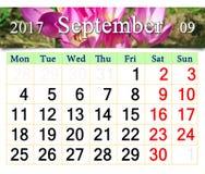 Calendario per il maggio 2017 con i germogli di fioritura del colchicum autumnale Fotografia Stock