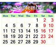 Calendario per il settembre 2017 con l'ape sull'aster rosa Fotografia Stock