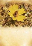 Calendario retro. Mayo. Paisaje de la primavera del vintage. Imagen de archivo libre de regalías